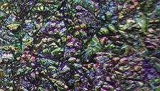 Green Abalone 3D