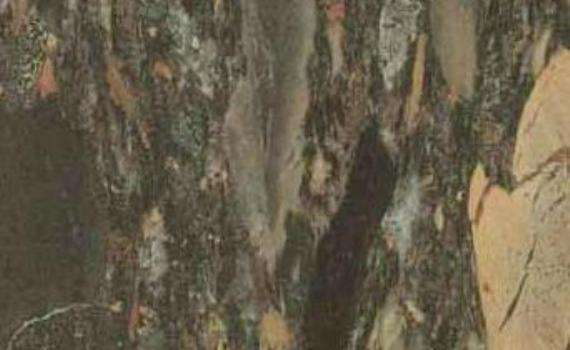 Green Egyptian Breccia Marble
