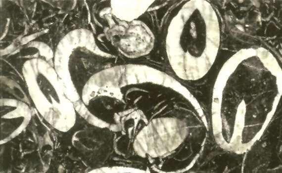 NG168 Dream Circle Granite