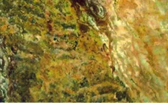 Polynesia Quartizite