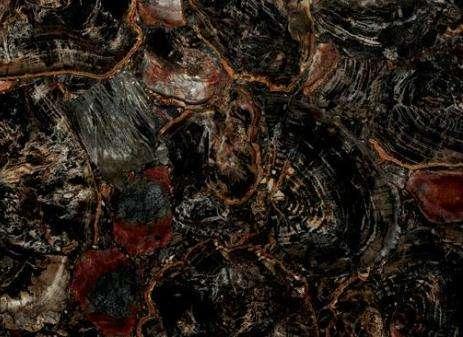 Black Petrified Wood Stone