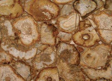 Indonesian Coral Gemstone