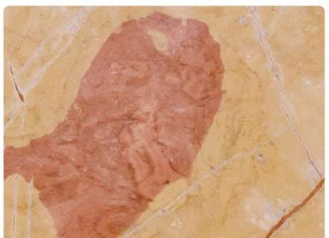 Jerusalem Red Stone Marble