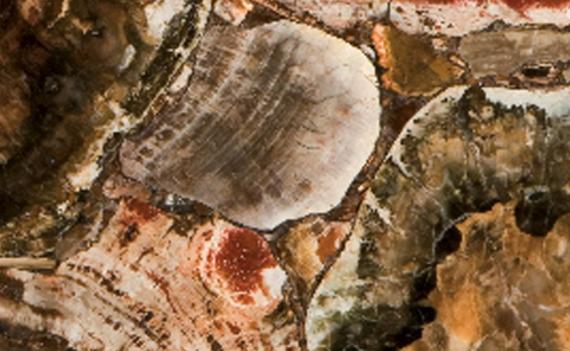 8330 Albero Caesarstone