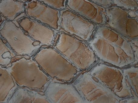 Brazilian Fossil Quartzite